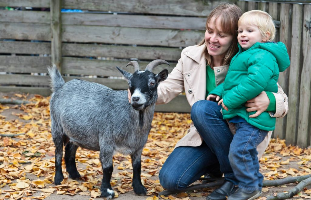 things to do in cork with the family